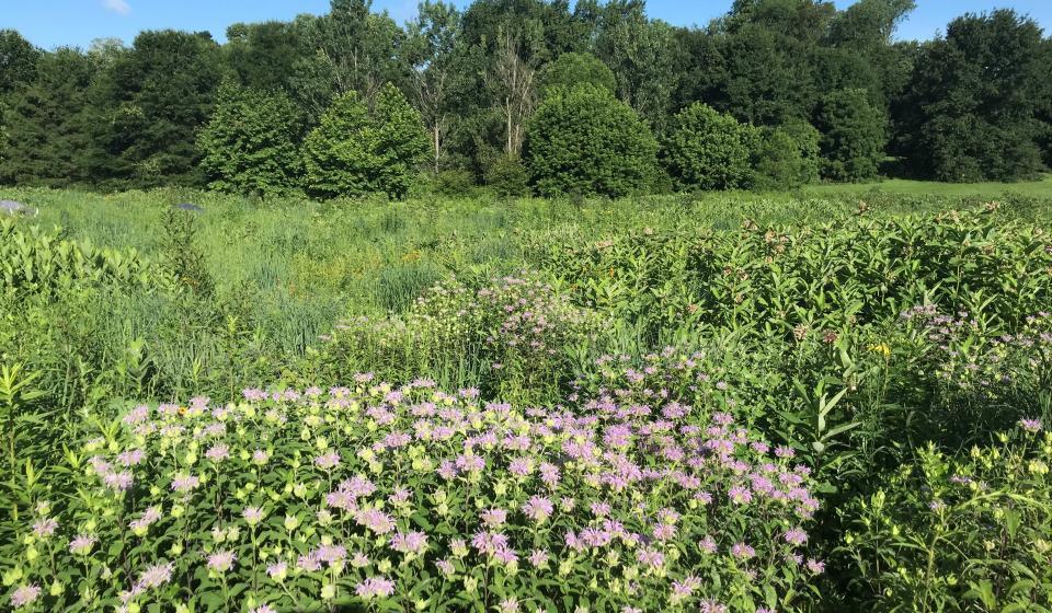 Shawnee Hills Meadow