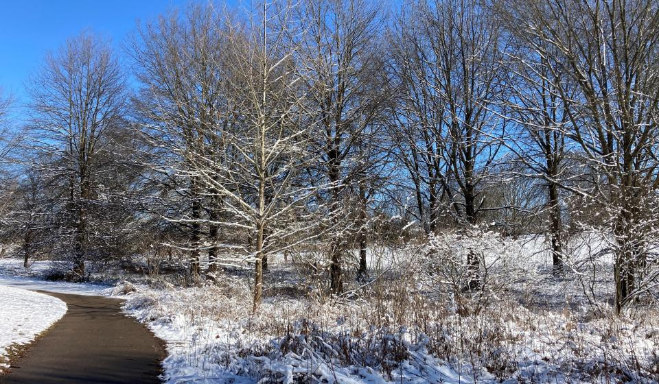 Floodplain Forest in the Snow