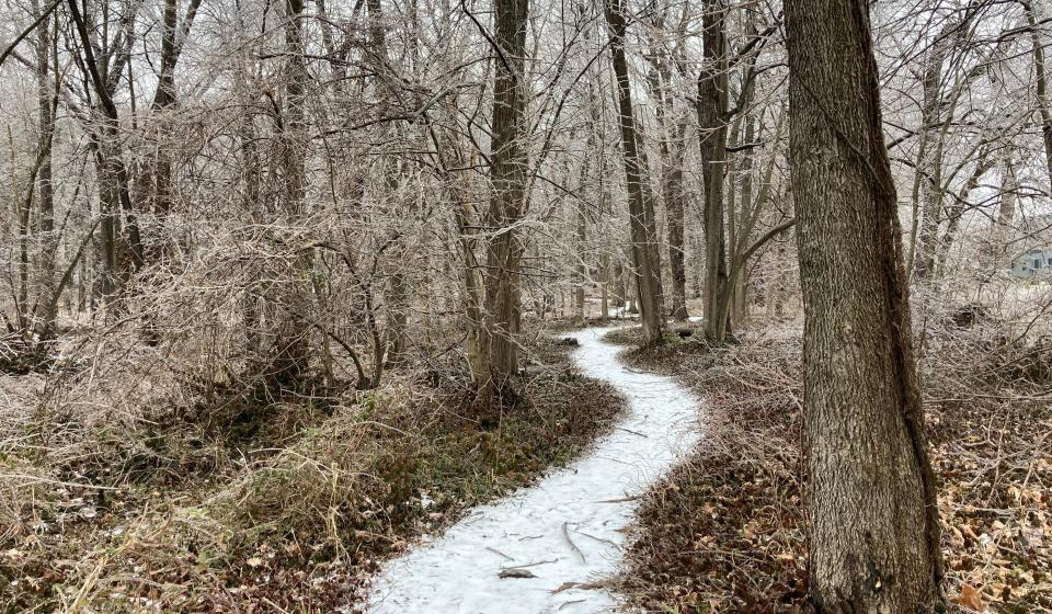 The Arboretum Woods